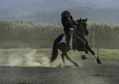 Spettacoli equestri #4