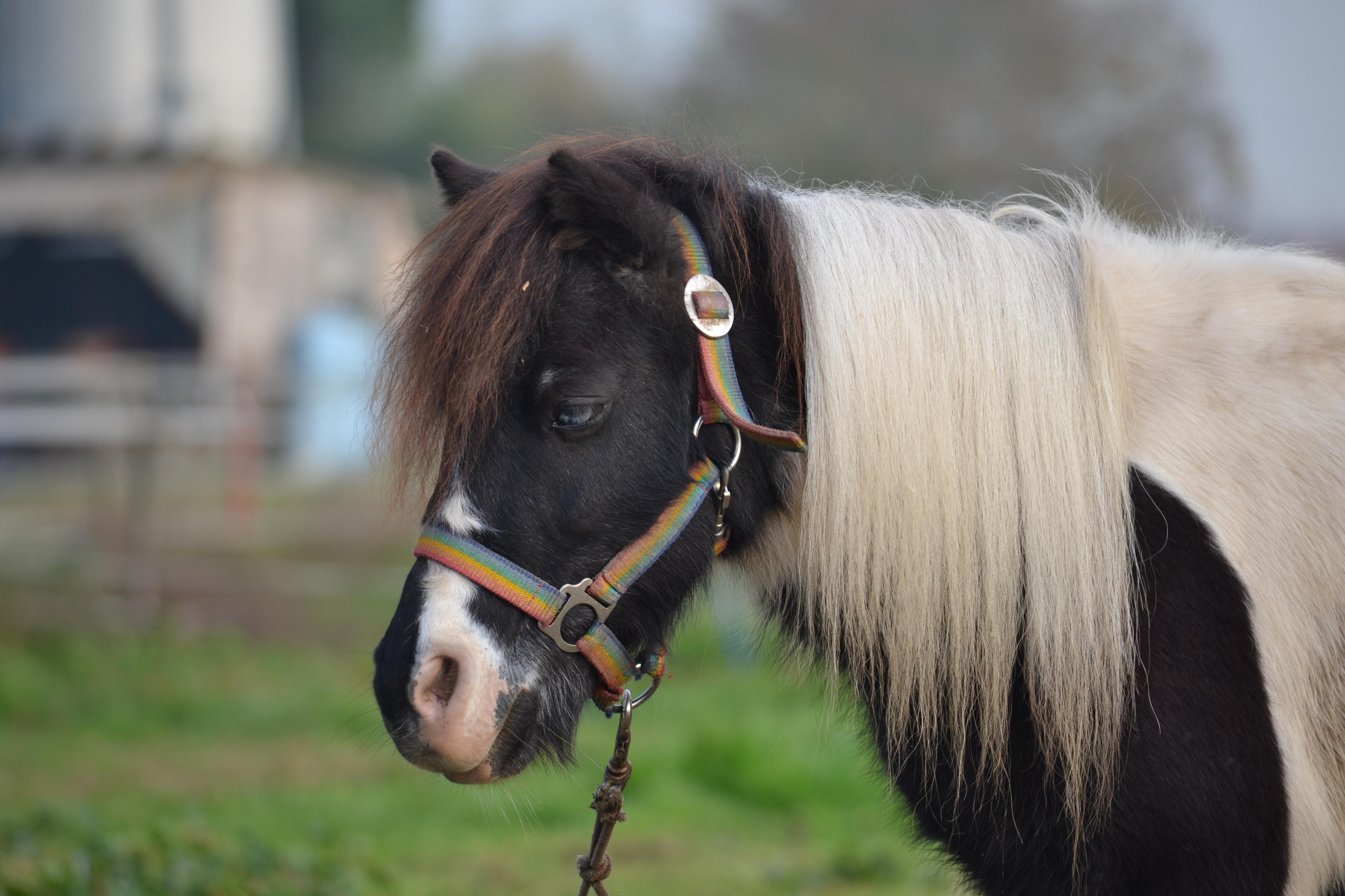 I cavalli e le carrozze a s d cavalli e carrozze for Disegno cavallo stilizzato